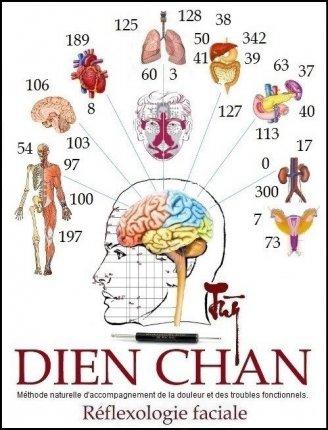 Cerveau organe
